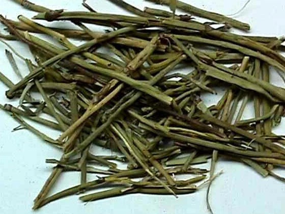 Ma Huang (Ephedra Sinica)