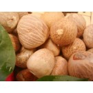 Betel Nuts (Areca catechu)