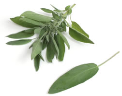 Salvia officinalis - Sage (OUT OF STOCK)