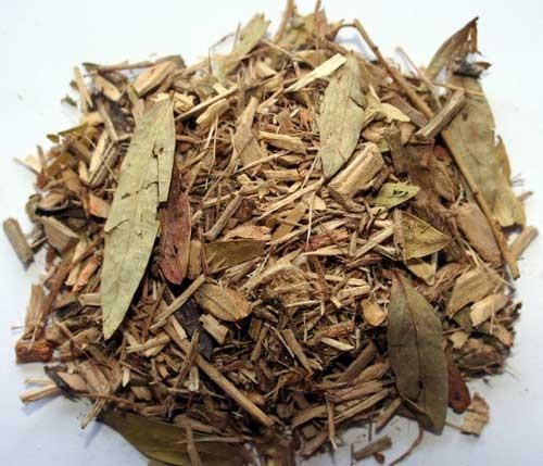 Camphor Bush :: Tarchonanthus camphoratus