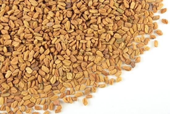Fenugreek Seed:: Trigonella foenum