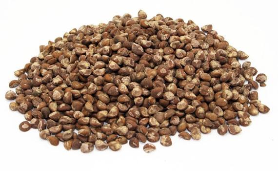 Hawaiian Baby Woodrose Seeds :: Argyreia Nervosa