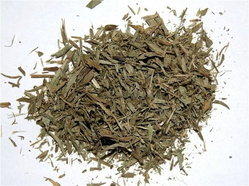 Maconha Brava :: Zornia latifolia