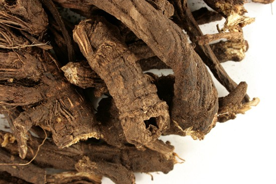 Osha Root :: Ligusticum porteri