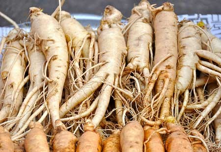 Image result for Panax ginseng images