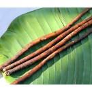 Burdock Root :: Arctium lappa