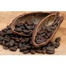 Cacao Nibs :: Theobroma cacao