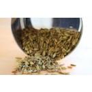 Fennel Seed :: Foeniculum vulgare