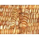 "Sacred Tobacco, ""Mapacho Logs"" :: Nicotiana rustica"