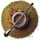 Yerba Mate Tea :: Ilex paraguariensis